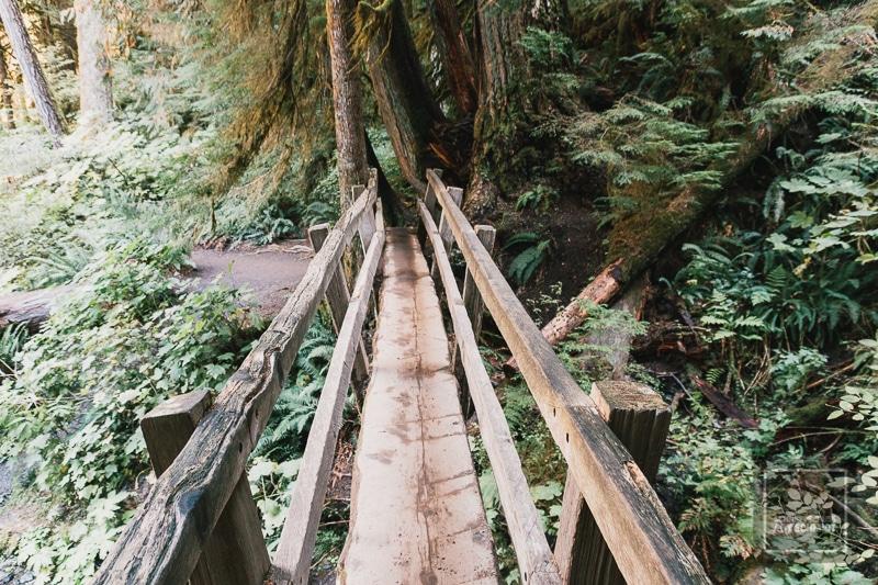 Olympic National Park - Brücke