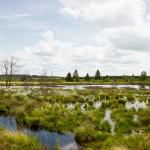 Wandern im Hohen Venn in Belgien – Wasser in seiner schönsten Form
