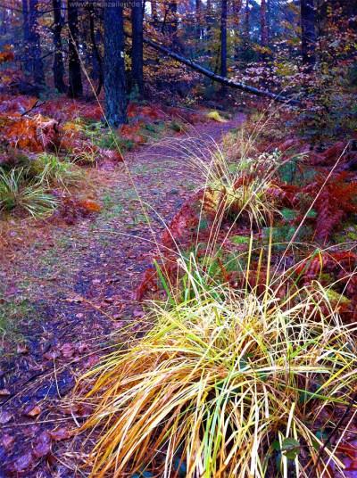 Wandern im Naturpark Pfälzerwald