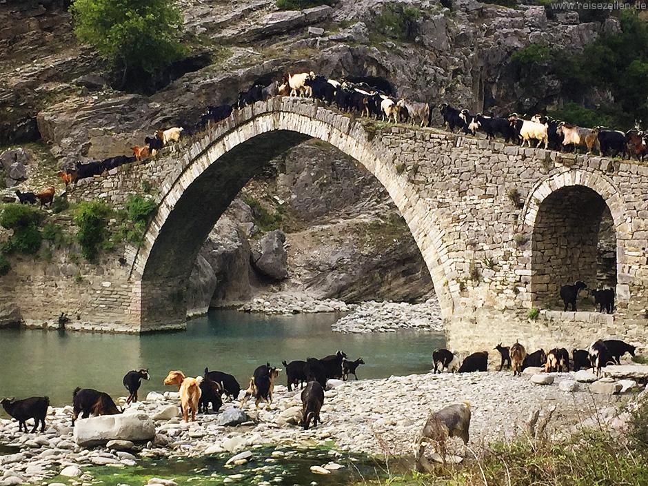 Albanien_Ziegen auf der Brücke - Reisen - Reisetipps - Reiseberichte