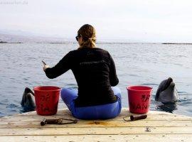 Israel Dolphin Reef Eilat