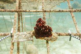 bedrohte Korallenriffe