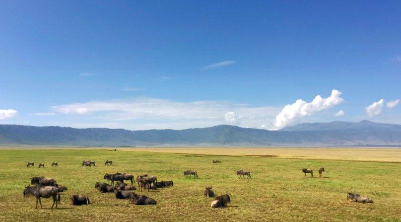 Ngorongoro_Krater_Gnuherde