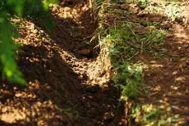 Puits sec: technique consistant à laisser les racines du gazon à l'air libre et ainsi à freiner sa croissance dans la fosse de plantation.