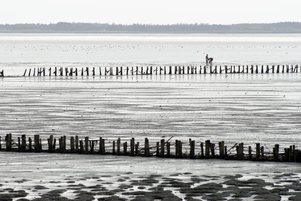 Rømø ved Vadehavet