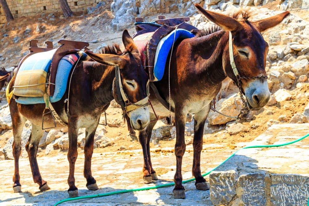 Taxi æsler - Rhodos i Grækenland