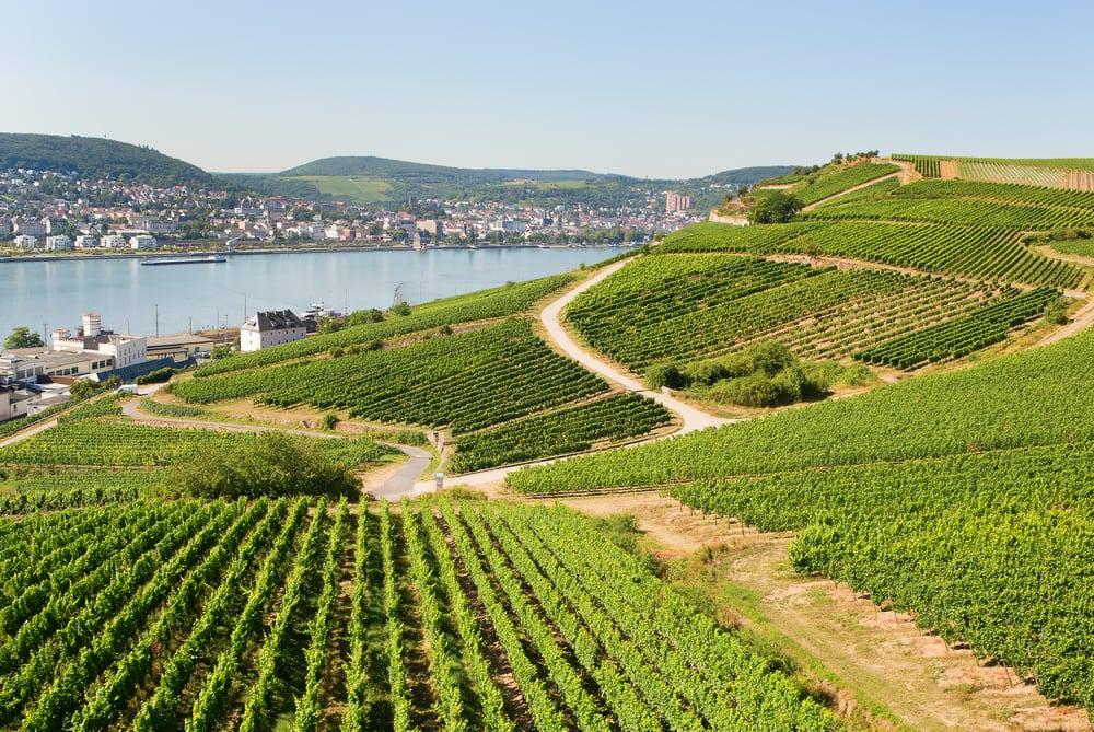 Vinmarker i Rüdesheim am Rhein