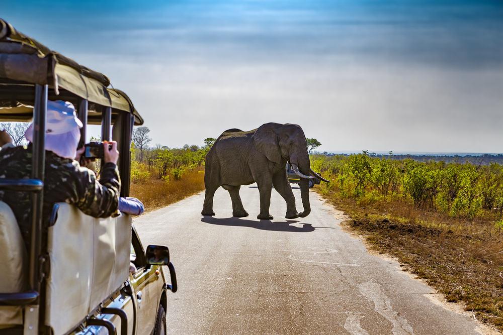 Elefant i Kruger National Park - Sydafrika