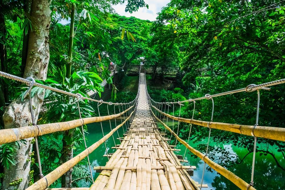 Tropisk regnskov - Filippinerne