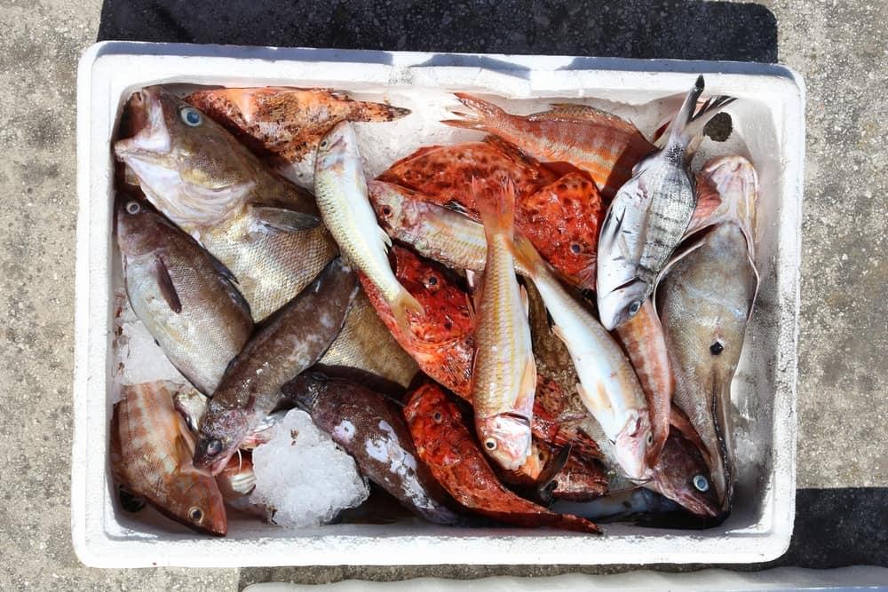 Friskfanget fisk - Korfu i Grækenland