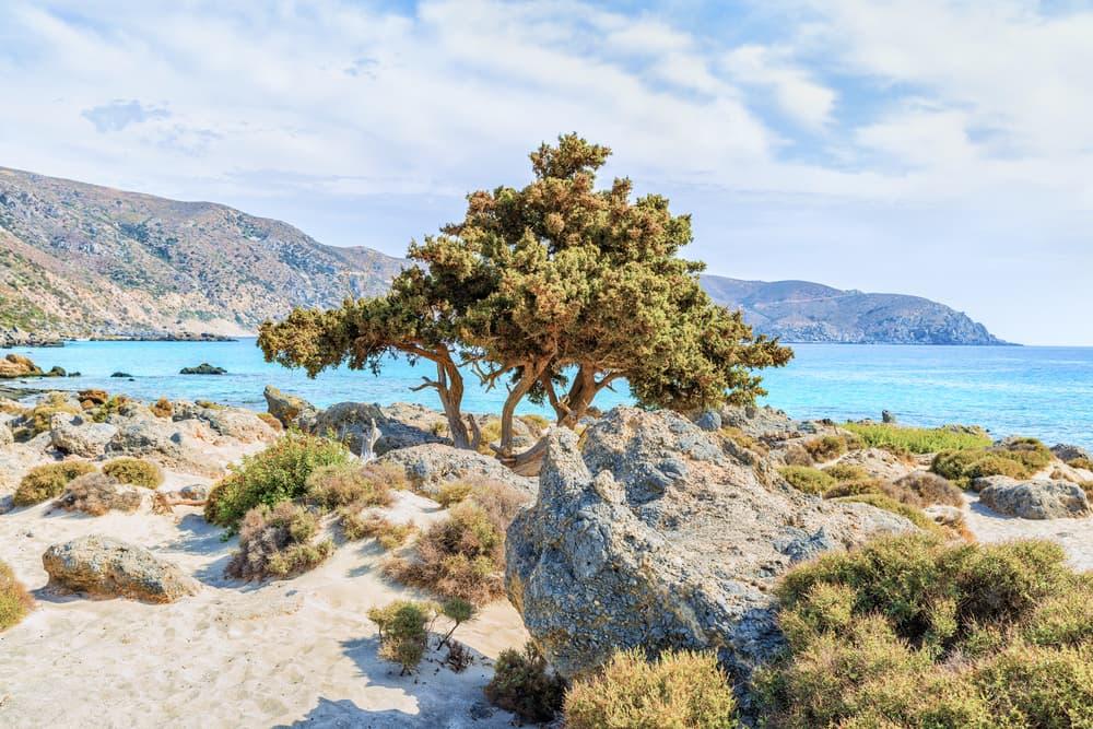 Kedrodasos stranden - Kreta i Grækenland