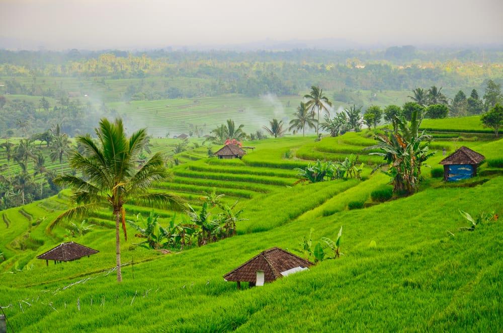 Jati Luwih risterrasser - Indonesien