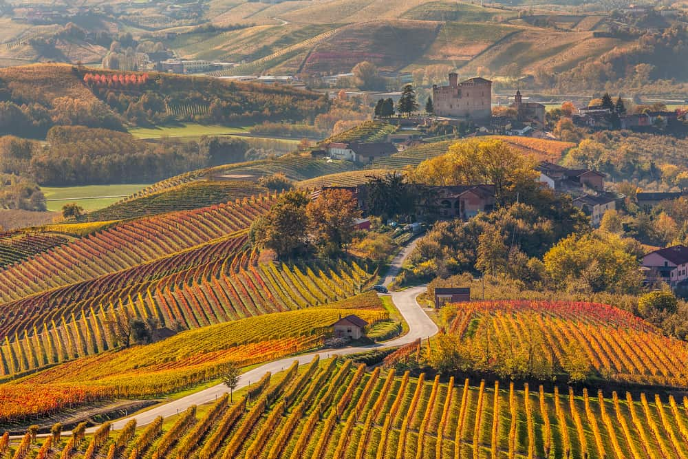Vineventyr i Pietmont-regionen i Italien