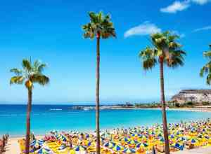Palmer, strand og vand ved Playa de Amores på Gran Canaria i Spanien.