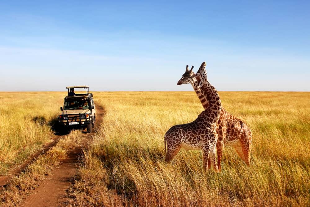 Safari i Serengeti - Tanzania