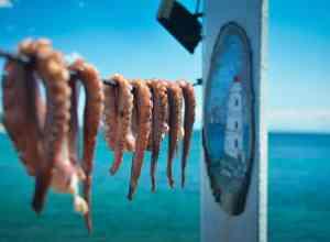 Blæksprutter til tørre - Skiathos i Grækenland