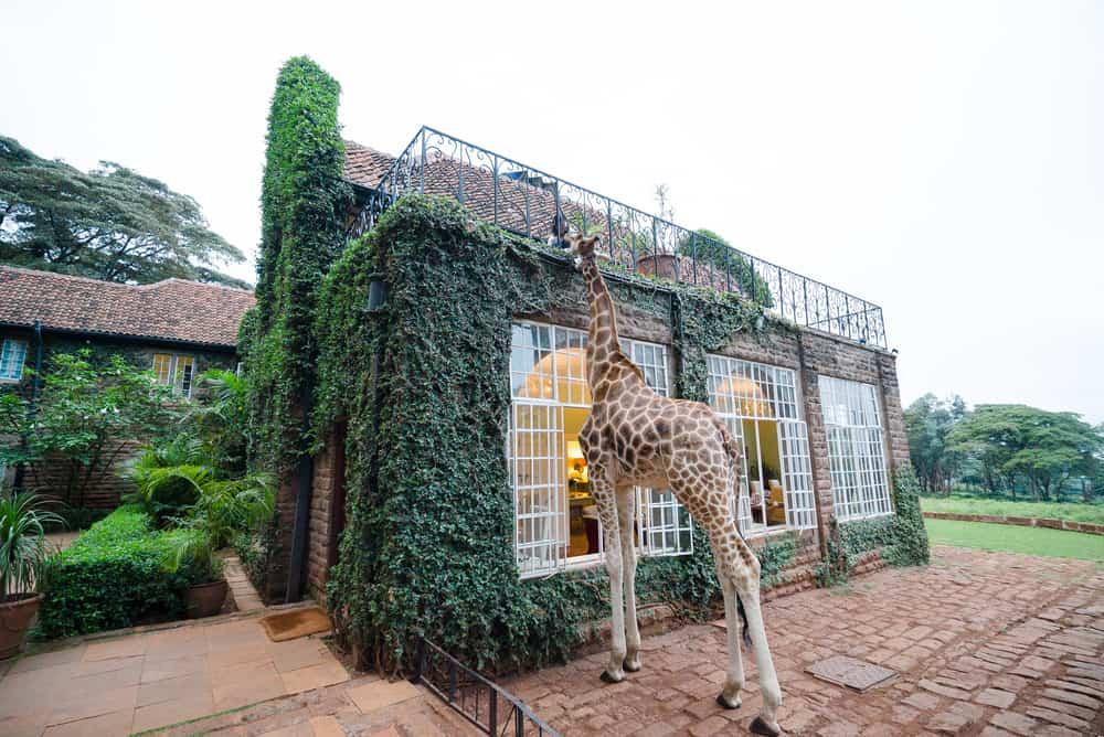 Giraffe Manor Nairobi i Kenya
