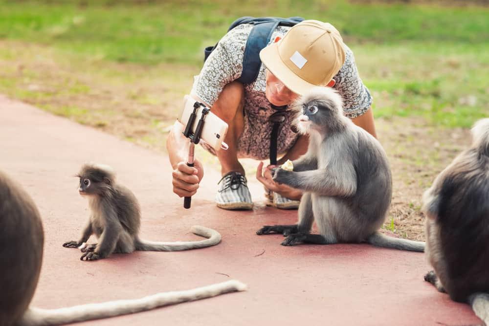 Selfie med abe