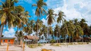 Filippinerne strand palmer - rejser