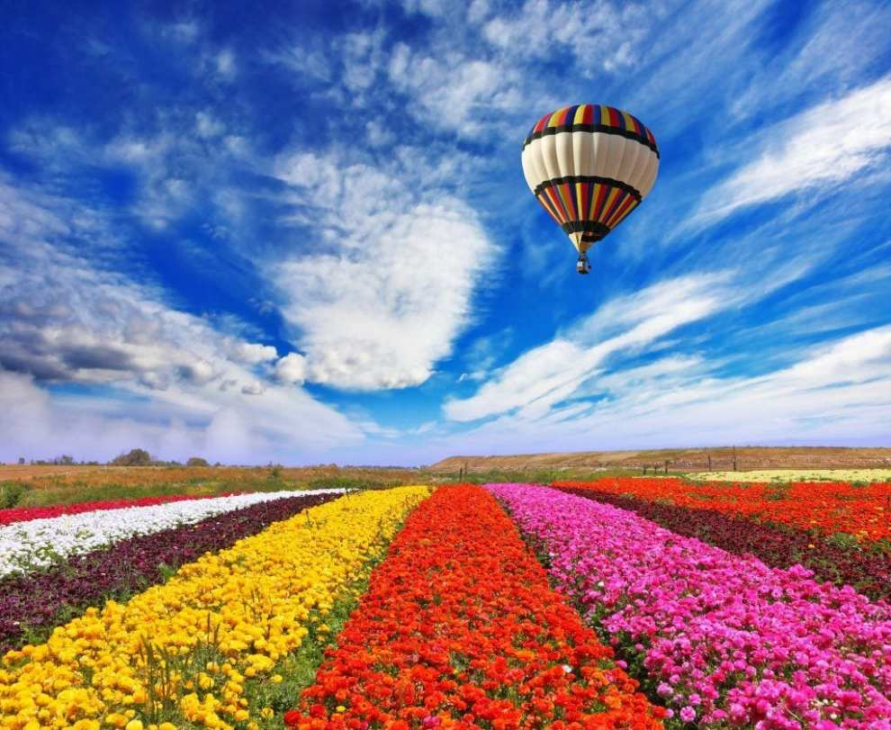 Holland ballon - blomstermark - rejser