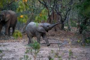 Sydafrika Kruger national park - rejser