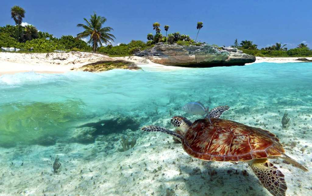 Tanzania - Zanzibar - Afrika - havskildpadde - hav, strand - fisk, dykke, rejser
