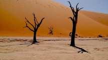Namibia - Sossusvlei, ørken - rejser