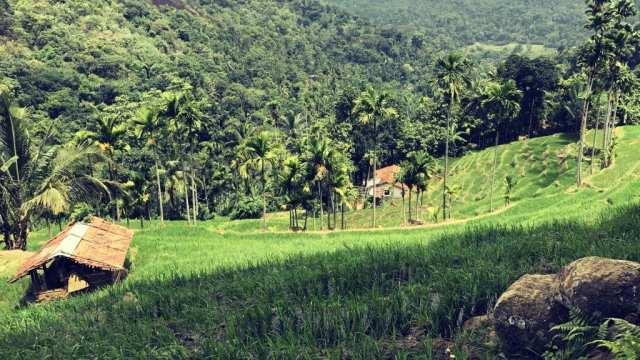 Sri Lanka - Reise