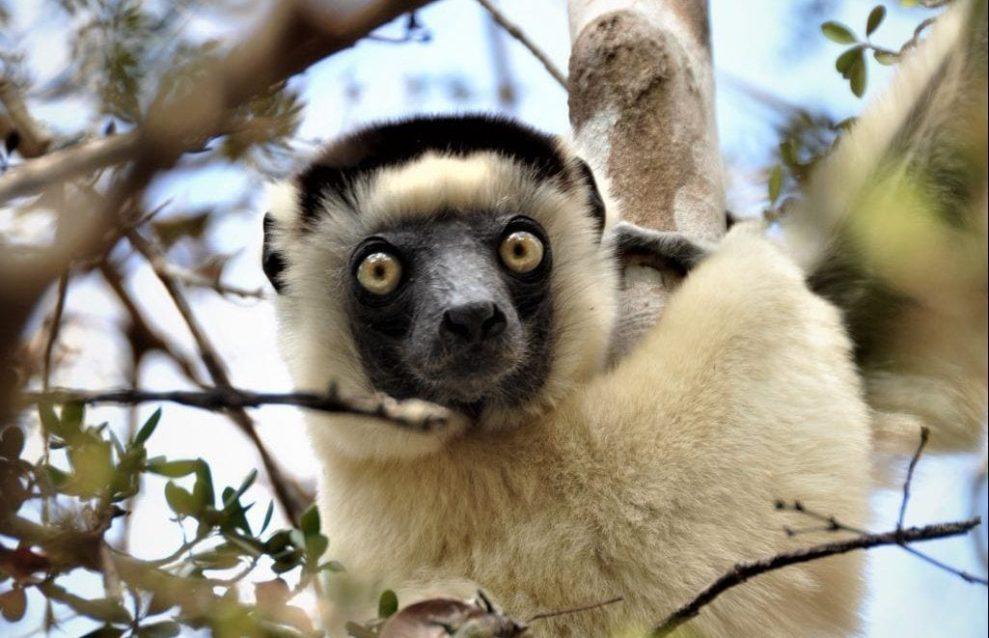 Madagaskar - seyahat