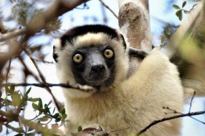 Madagaskar - resa