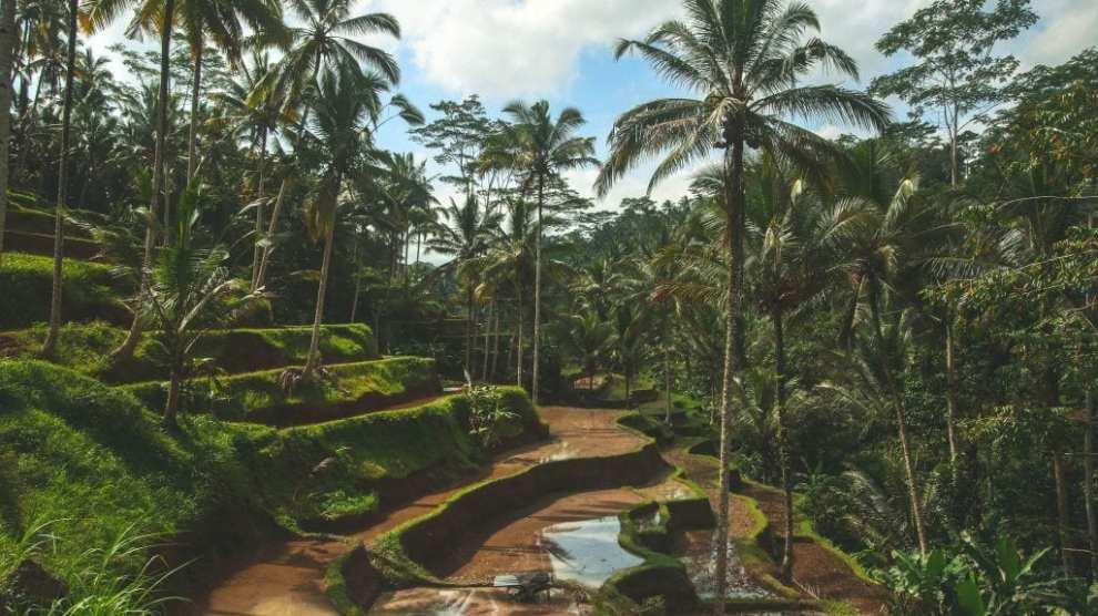 Bali - vulkan - natur - reise