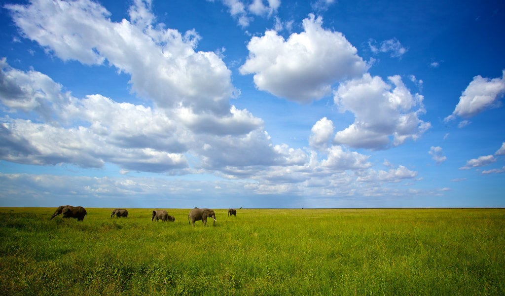 Tanzania - Elefanter i Serengeti Nationalpark - safari - rejser