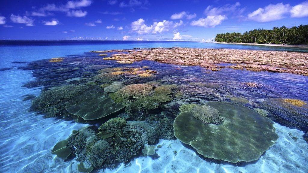 Thailand - Koh Jum - koralrev - ferie i thailand - rejser