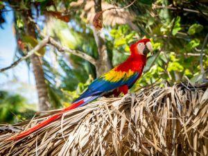 Costa Rica - perroquet - tropical - voyage