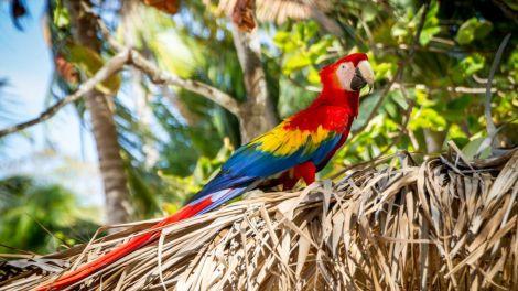 Kosta Rika - papağan - tropikal - seyahat