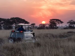 Safari - Serengeti - Tansania