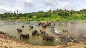 Sri Lanka - Natura - Elefanti - Viaggio