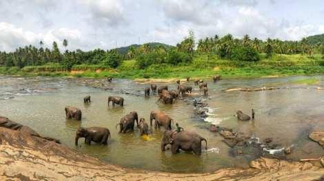 Sri Lanka - Nature - Elephants - Travel