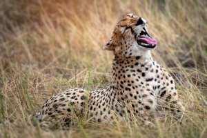 Tanzania - Safari - Rejser