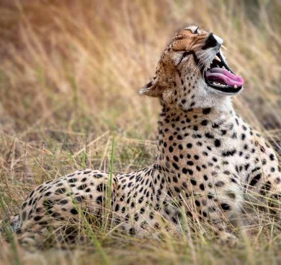 Tansanía - Safari - Ferðalög