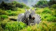 Safari - Sydafrika - Rejser