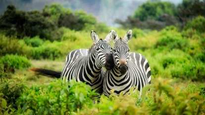 Safari - South Africa - Travel
