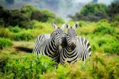 Safari - Afrique du Sud - Voyage