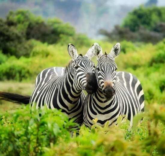 Safari - Republika Południowej Afryki - Podróże