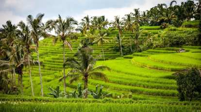 Rice fields - Bali - Travel