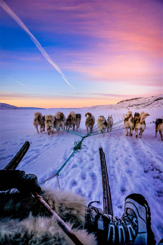 Jesper Frank - Kangerlussuaq - Greenland - dog sled - snow