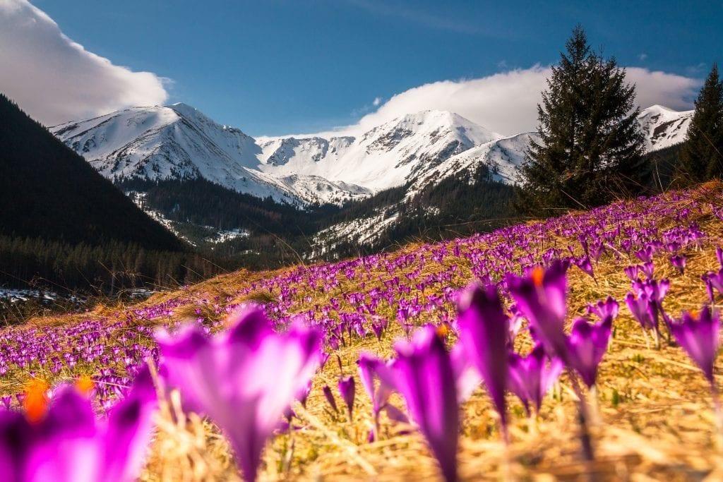 slovaquie - montagnes - fleurs - voyage