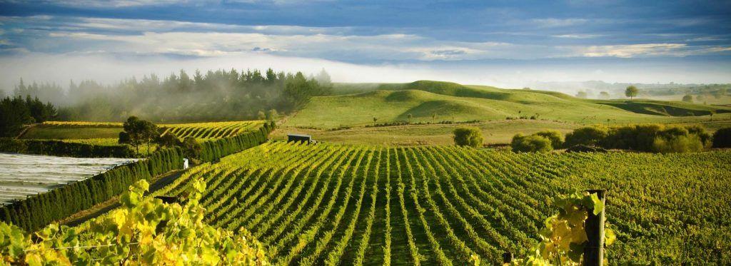 New Zealand - vinmark - landskab