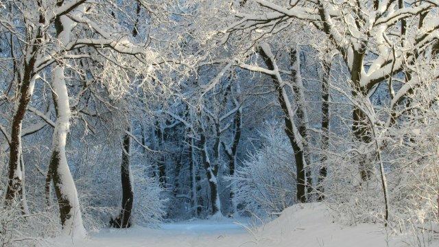 Zimski šumski snijeg