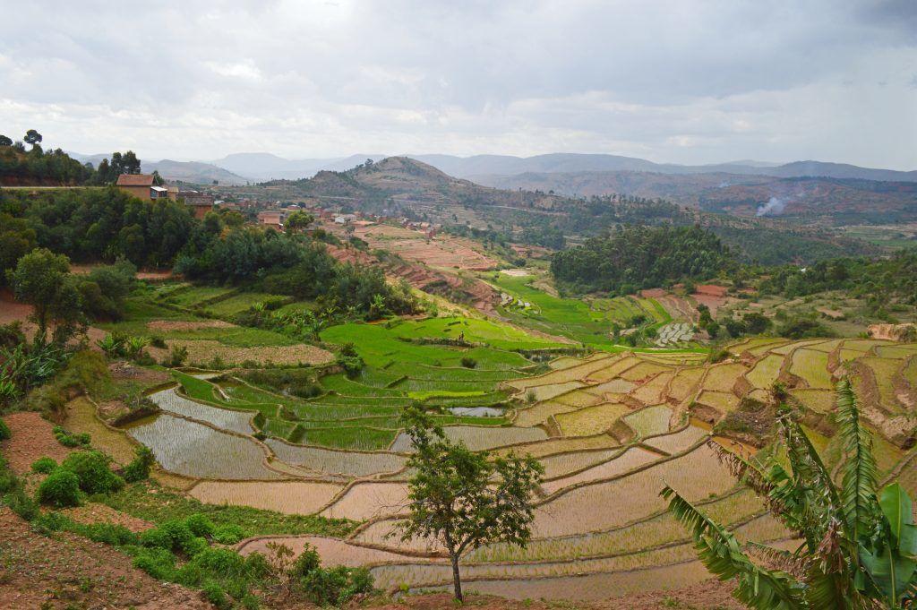 Madagaskar - ris terrasser - rejser